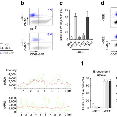 Uptake of CD63-GFP exosomes by immune cells.(a