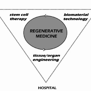 (PDF) Skeletal Regeneration by Mesenchymal Stem Cells