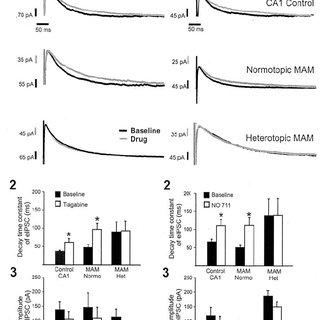 GABA transport inhibitors do not alter eIPSC responses on
