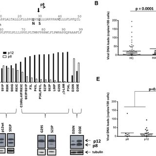 (PDF) Co-dependence of HTLV-1 p12 and p8 Functions in