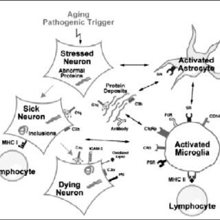 (PDF) Inflammation as a Mediator of Oxidative Stress and