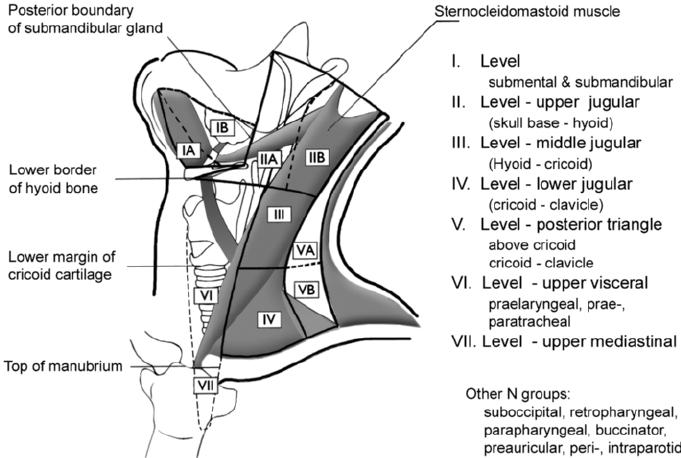 lip anatomy diagram blaupunkt 520 wiring cervical lymph node regions - imaging-based level system (som). | download scientific