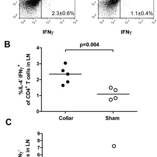 Increased systemic inflammatory response after injury of