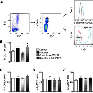 The effect of diabetes and NFAT inhibition on plasma IL-6