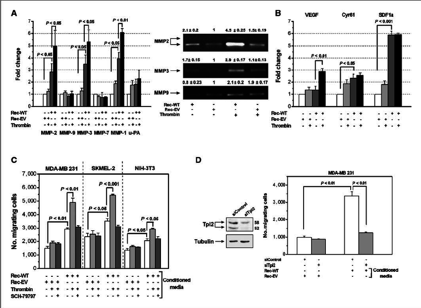Proteinase-Activated Receptor-1-Triggered Activation of