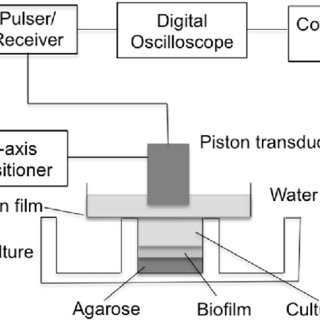 (PDF) Ultrasound Imaging and Characterization of Biofilms