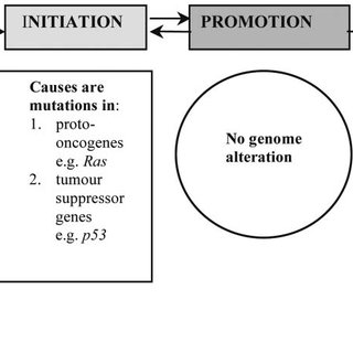 (PDF) Review. Animal models of carcinogenesis in the