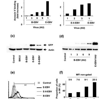 (PDF) Capacity of Epstein-Barr virus to infect monocytes