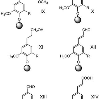 Phenoxy radicals formed by oxidation of coniferyl alcohol