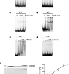 duf283 binds single stranded nucleic acids of different lengths in a concentration dependent manner [ 850 x 1224 Pixel ]