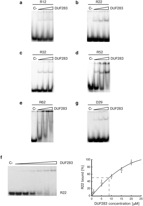 small resolution of duf283 binds single stranded nucleic acids of different lengths in a concentration dependent manner