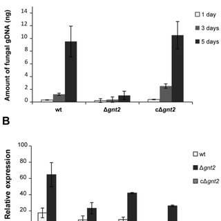 (PDF) The Fusarium oxysporum gnt2, Encoding a Putative N