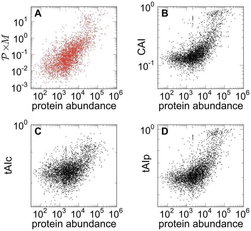 Ribosome Traffic on mRNAs Maps to Gene Ontology: Genome