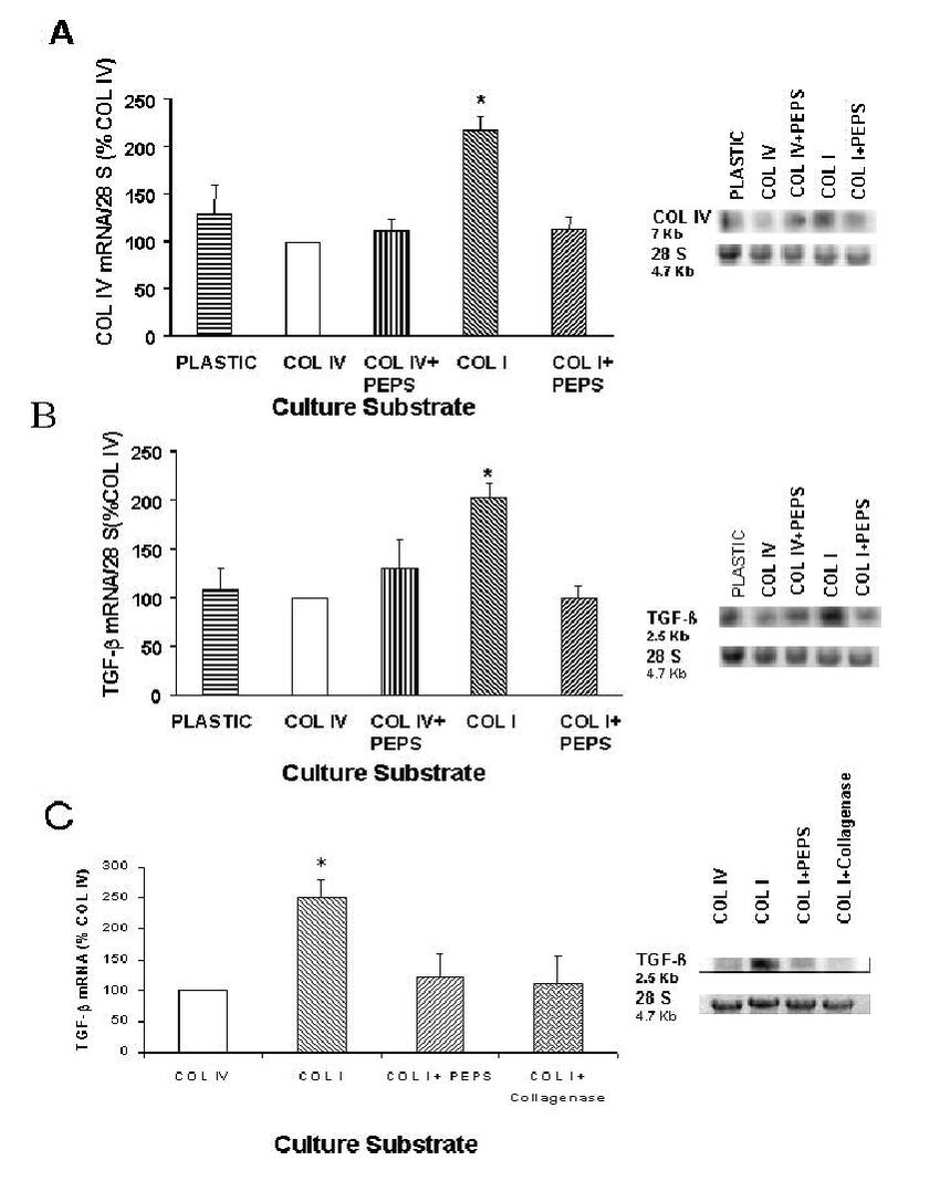 Collagen I upregulates extracellular matrix gene