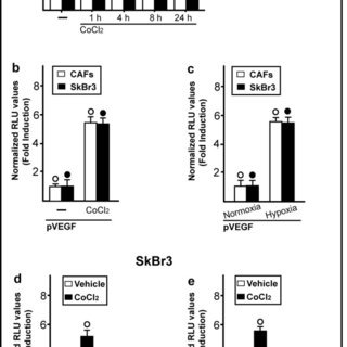 HIF-1α and GPER are involved in the hypoxia-induced