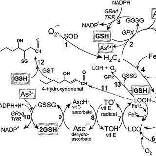 (PDF) Metals, toxicity and oxidative stress