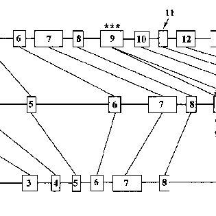 Sequence analysis of the sunflower ζ-carotene desaturase