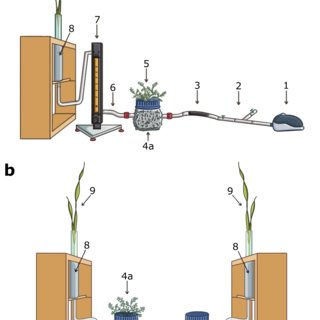 labelled diagram of soil profile hot water heater thermostat wiring overview the known and potential mechanisms mediating plant-plant... | download scientific ...