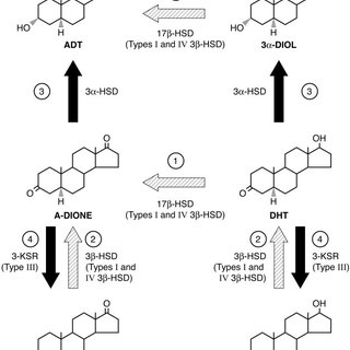 EGF activates type II 3-HSD reporter activity through a