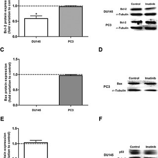 Effect of imatinib (20 mM) on protein levels of Bcl-2 (A