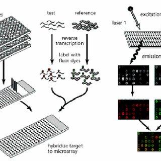 (PDF) DNA Microarrays: 21st century pathogen detection