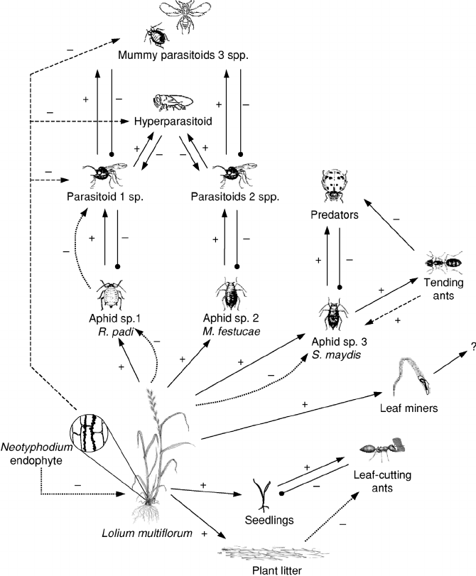 2. Interaction web for insect consumers on endophyte