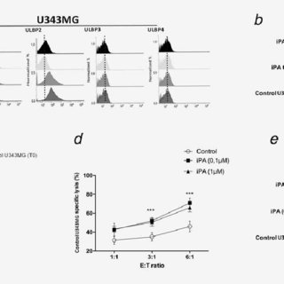 The protein expression of EMT markers and fibronectin in
