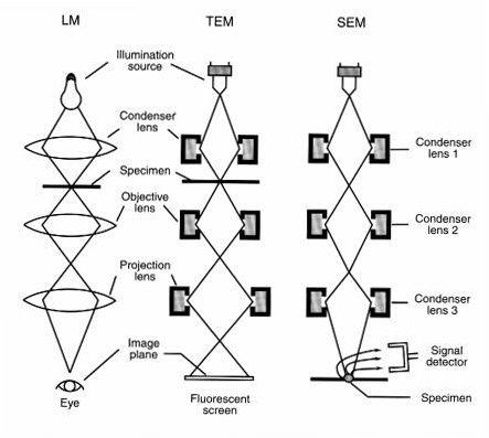 Organisation of Light Microscope (LM), Transmission