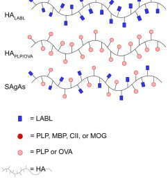 derivatized hyaluronic acid ha polymers with multiple units of either conjugated antigenic or signal [ 850 x 1194 Pixel ]