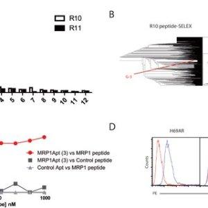 Characterization of MRP1CD28 bispecific aptamer A Bi