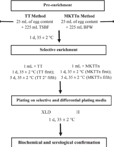 Flowchart diagram for detection of salmonella in egg content by tetrathionate broth tt muller kauffmann novo biocin mkttn and pcr also rh researchgate