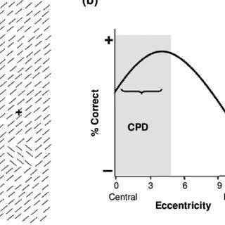 (PDF) Vertical meridian asymmetry in spatial resolution