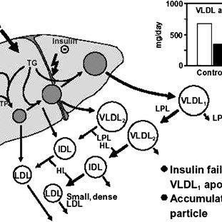 (PDF) Diabetic dyslipidaemia: From basic research to