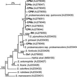 Cluster analysis of bacteria according to bacteriocin