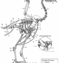10 chicken skeleton chamberlain 1943  [ 850 x 1137 Pixel ]