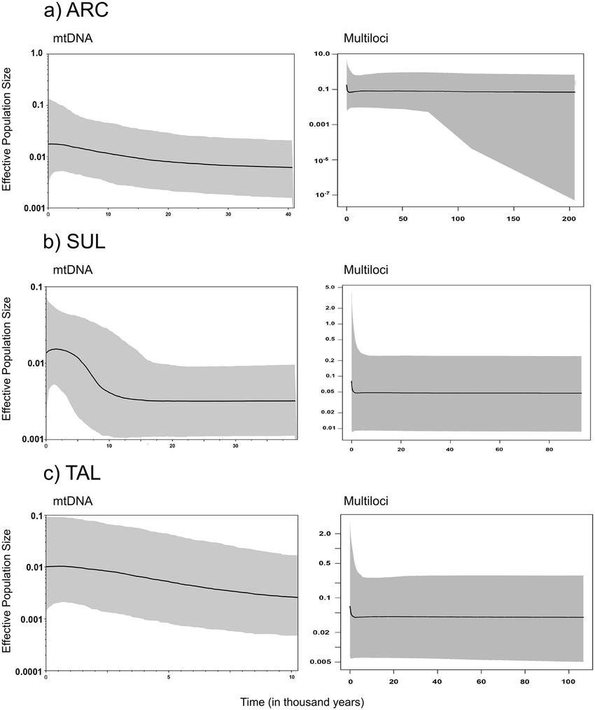 medium resolution of extended bayesian skyline plot for mtdna left and multiloci right data for