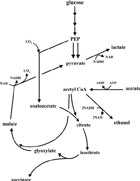 Simple Chemical Engineering Process Diagram