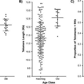 (PDF) Telomeres and Longevity: Testing an Evolutionary