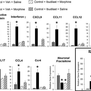 Neonatal handling significantly attenuates CPP to morphine