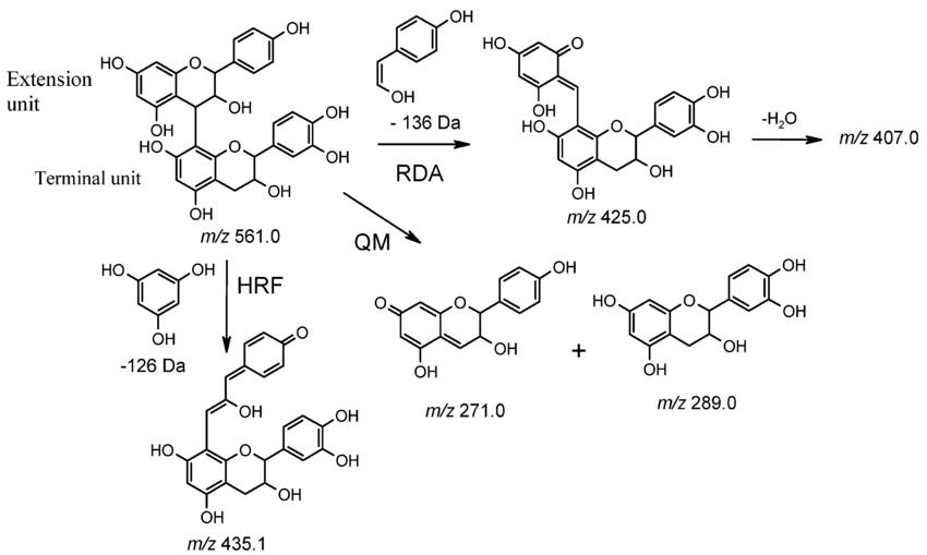 Fragmentation pathway of a propelargonidin dimer detected