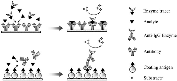 8.3. Scheme of two of the ELISA formats most frequently
