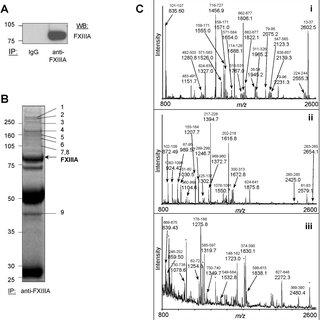 (PDF) Immune vs. thrombotic stimulation of platelets