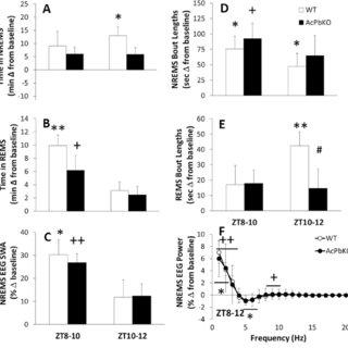 (PDF) The neuron-specific interleukin-1 receptor accessory