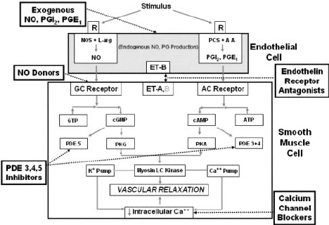 Effects of systemic vasodilation (from intravenous