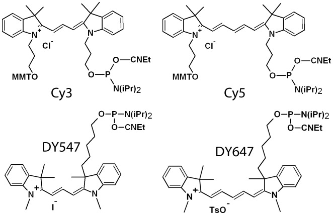 Monomethoxytrityl (MMT) groups are present on the Cy-dyes