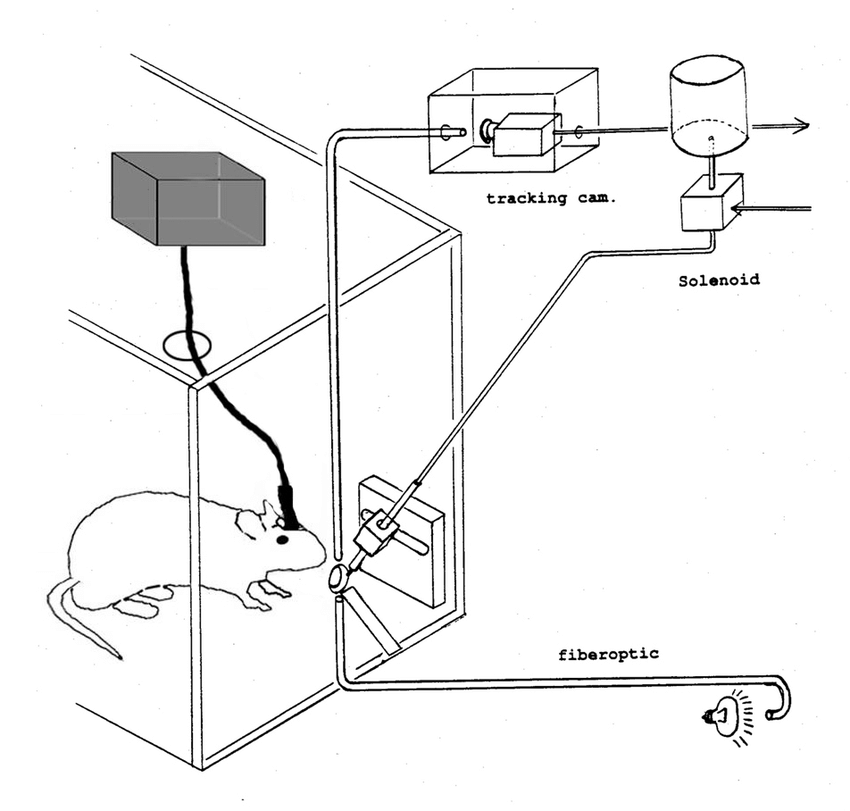 Schematic illustration of the licking apparatus. The rat