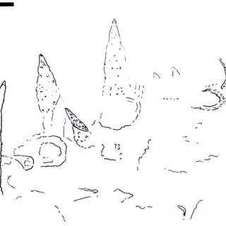 (PDF) A chancelloriid-like metazoan from the early