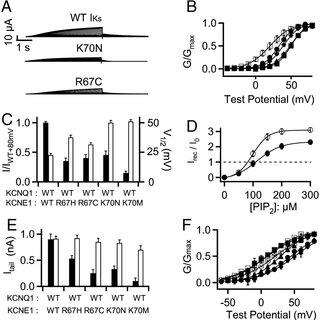 (PDF) KCNE1 enhances phosphatidylinositol 4,5-bisphosphate