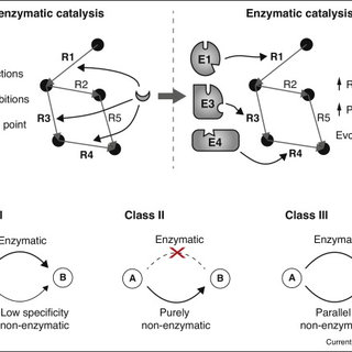 Class III non-enzymatic reactions occur in parallel to the