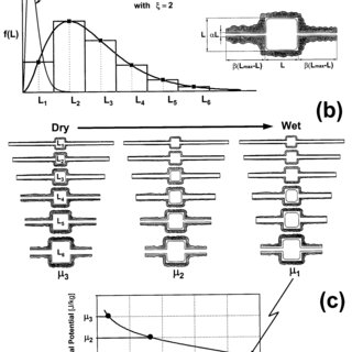 (PDF) Liquid Retention and Interfacial Area in Variably